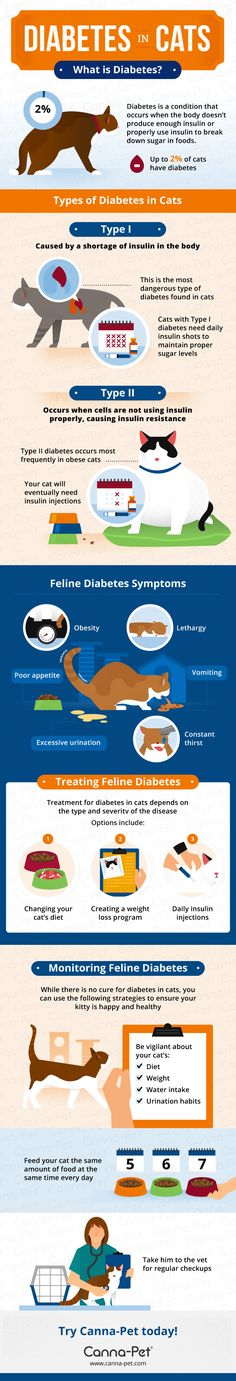 Diabetes in Cats