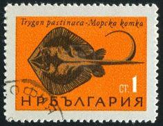 Bulgaria (circa 1965) - #stamp printed by Bulgaria, shows Black Sea Fish, Stingray (...)