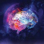 Neurogénesis: 7 alternativas para crecer nuevas células en el cerebro y volverse más inteligente