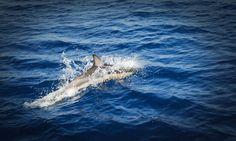 Dolphins around Zakynthos