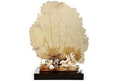 """PHILMORE USA Sea Fan on OneKingsLane.com  
