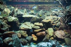 LakeMalawiBiotope. - Not to bad for a cichlid tank. They actually tried to make it realistic!!!