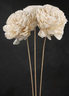 Sola Flowers on Wired Stems | Set of 3