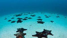 Ταξιδέψτε στα πιο κρυστάλλινα νερά του κόσμου - image (c) clickatlife.gr