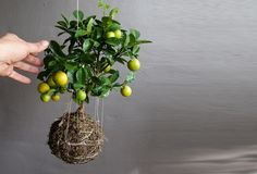 Flowering String Gardens Suspend Fruits and Greenery in Delicate Webs of Twine String Gardens – Inhabitat - Sustainable Design Innovation, Eco Architecture, Green Building