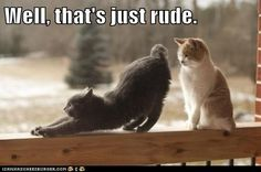 funny cat pictures - Well, that's just rude.