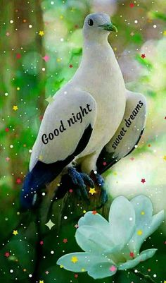 Photos Of Good Night, Good Morning Beautiful Pictures, Good Morning Flowers, Good Night Image, Good Morning Images, Good Night Messages, Good Night Wishes, Good Night Sweet Dreams, Good Night Quotes