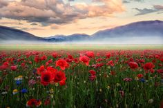 ***Land Of Dreams (Italy) by Alessandro Scendoni / Most Beautiful Beaches, Beautiful Places, Pallette, Angeles, Amazing Pics, Interesting Photos, Red Poppies, Green Flowers, Nature Scenes