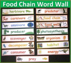 Food Chain and Food Web Vocabulary Words -