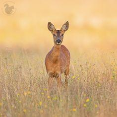 Looking in your big brown eyes.... by Theo Vanden Wyngaert on 500px
