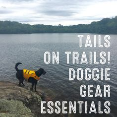 All the gear your dog needs! The essentials, the gear for more experienced dogs, and the seasonal stuff.