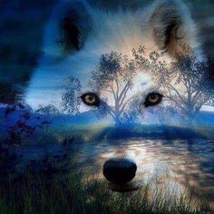 Wolf over blue sky