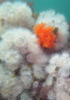fuzzy underwater flowers
