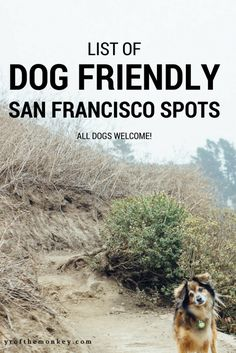 This is a complete guide to dog friendly spots in San Francisco, California, USA by a resident dog mom listing some of the best San Francisco dog parks with stunning views to be enjoyed by human and canine alike! Pin this to your pet friendly travel or Sa Dog Travel, Travel Usa, Travel Tips, Travel Guides, San Francisco Travel Guide, Year Of The Monkey, Pet Friendly Hotels, Hiking Dogs, Dog List