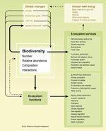 Biodiversity and ecosystem services