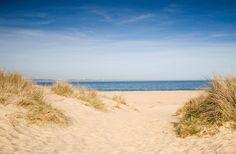 Studland Sand Dunes - Photos of Dorset