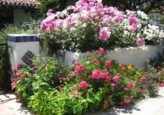 Contrario a lo que se pueda pensar, plantar rosas en el jardín no requiere de grandes técnicas, habilidades o conocimientos,