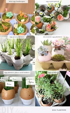 6  diy egg planters for the Easter. You can break up the egg when ready to repot. Instead of trying to scoop out the dirt and the tender young seedling.