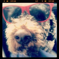 I have the coolest dog. (Taken with instagram)