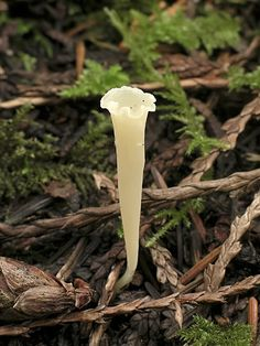 Gilled Mushrooms of the Pacific Northwest Pacific Northwest Key Council Mushroom Art, Mushroom Fungi, Wild Mushrooms, Stuffed Mushrooms, Mushroom Pictures, Slime Mould, Plant Fungus, Rare Plants, Planting Flowers