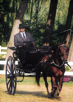 Carriage Driving: Art, Tradition, Beauty