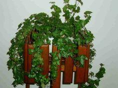 5 самых полезных растений для дома