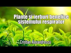 Plante Si Ierburi Benefice Pentru Plamani Si Sisistemul Respirator - YouTube Lungs, Herbs, Youtube, Plant, Herb, Youtubers, Lunges, Youtube Movies, Medicinal Plants
