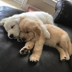 some goldens are more golden than others.....