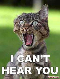 deaf cat.