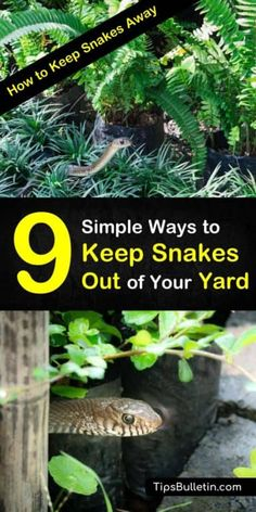 9 ways to keep snakes away from house and backyards. Learn how to make snake repellent using essential oils and other simple ingredients you can find in your house. Learn how to get rid of snakes and keep gardens and yards snake free all summer long. Organic Gardening, Gardening Tips, Vegetable Gardening, Container Gardening, Beginners Gardening, Texas Gardening, Gardening Services, Gardening Quotes, Hydroponic Gardening