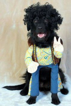 Need a few Dog Costumes for Big Dogs? Check out other pages throughout this site for even more dog costumes for big dogs - little ones too! Harry Potter Halloween Costumes, Great Halloween Costumes, Costume Ideas, Halloween Makeup, Animal Costumes, Pet Costumes, Dobby Costume, Hippie Costume, Halloween Disfraces