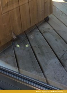 Invisible cat illusion - Writing inspiration #nanowrimo #settings #scenes #surreal
