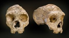 Gibraltar was home to some of the last Neanderthals (Credit: Natural History Museum/SPL)