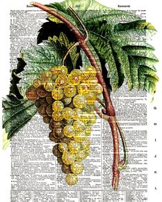 Golden Grapes - Vintage Dictionary Book Page Art Print, Print Size 8x10, Page Size 8.5x11, Ready for Framing!