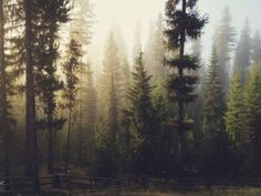 One Kings Lane - Kevin Russ, Sunrise Forest - Colville National Forest, WA Forest Art, Foggy Forest, Forest Light, Misty Forest, Foto Art, Belle Photo, The Great Outdoors, Woodland, Nature Photography