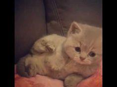 😂 love this little kitten 😊💗