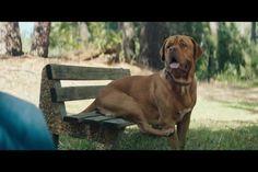 Volkswagen : The dog - Volkswagen - Passat : La nouvelle Passat de Volkswagen est si confortable qu'un chien est prêt à tout pour y prendre ... // à voir sur culturepub.fr // http://www.culturepub.fr/videos/volkswagen-passat-the-dog/