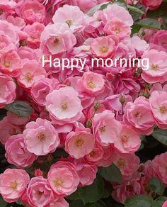 Happy Morning, Good Morning Gif, Good Morning Flowers, Good Morning Wishes, Morning Images, Good Morning Quotes, Hello Quotes, Beautiful Rose Flowers, Goddess Lakshmi