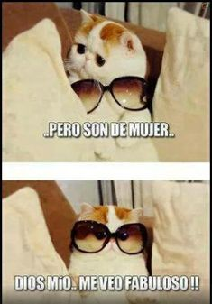 40 ideas funny photos lol pictures for 2019 Funny Spanish Memes, Funny Cat Memes, Funny Cats, Hilarious, Funny Animal Vines, Funny Animals, Cute Animals, Funny Animal Pictures, Funny Images