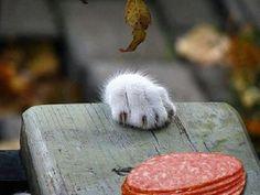 The salami stealer in....