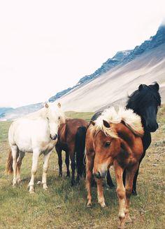 Iceland Travel Journal // Akureyri // Shannon Kirsten #akureyri #iceland #north