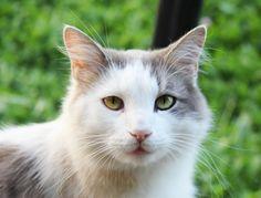green eyes #metucats