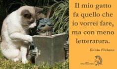 """""""Il mio gatto fa quello che io vorrei fare, ma con meno letteratura"""" (E. Flaiano)"""