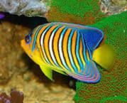 peces de colores - Buscar con Google