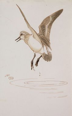 The Wildlife Art Gallery - R. Talbot-Kelly - Page 1