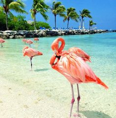 Aruba- this is the private island that was apart of our hotel in Aruba. Love it! Although the hubby was not a fan of the flamingos.