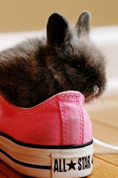 Cute Black Bunny Pink Converse All Star iPhone 6 Plus HD Wallpaper