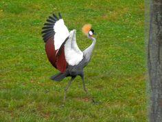 Crazy looking bird @Aviary of Columbus Zoo