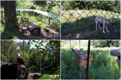Sortie en famille Zoo Ecomuseum animaux du Québec