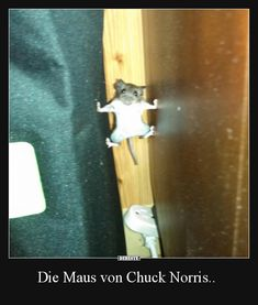 The mouse of Chuck Norris . Funny Animal Fails, Animal Memes, Funny Animals, Animal Funnies, Animal Pics, Wild Animals, Best Funny Pictures, Funny Photos, Cute Pictures